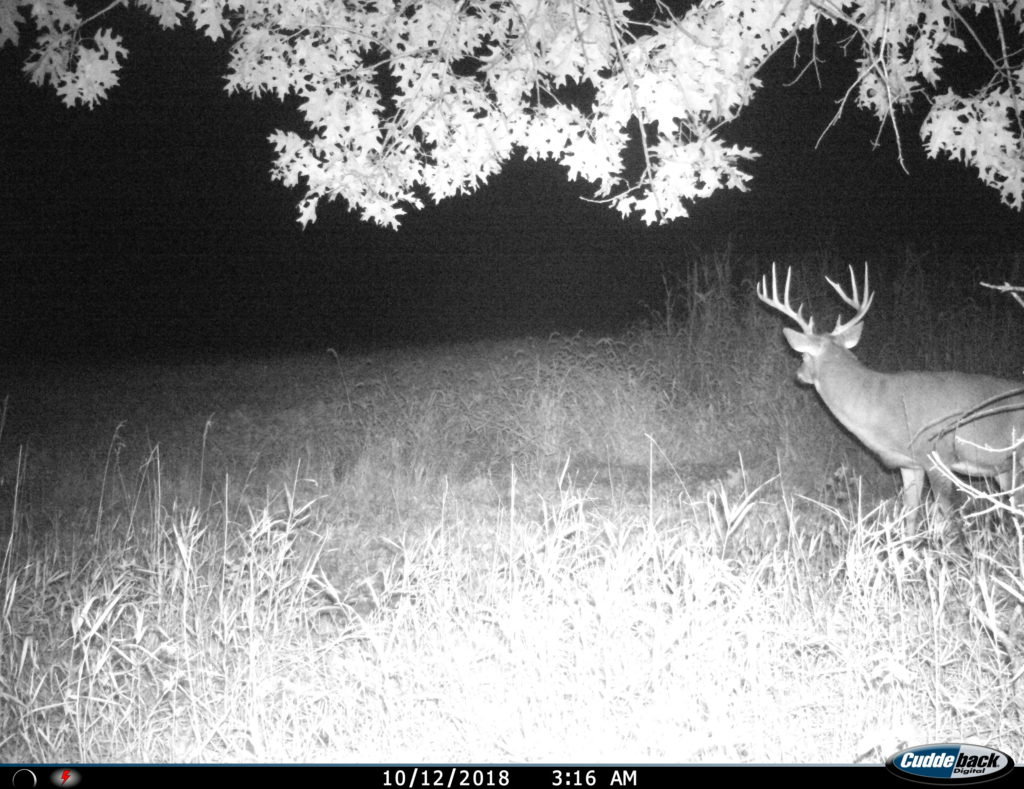 Illinois Trophy Deer Hunting Outfitter